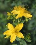 Heilkräuter-Seiten - Über 700 Heilpflanzen und ihre Heilwirkungen